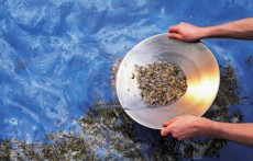 panning_for_gold